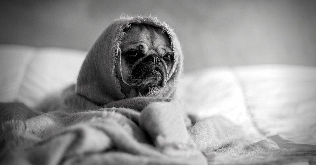 Spannender Blogger in langweiliger Nische werden